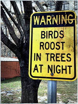 11 Warning - Birds