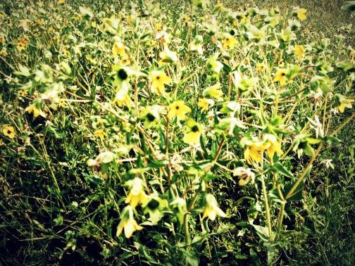 A Yellow Mess