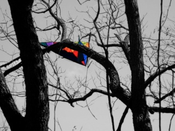 Kite of many colors