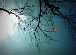 Lonesome Kite