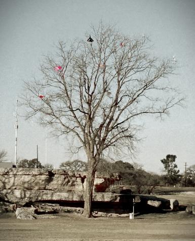 Kite Eating Tree