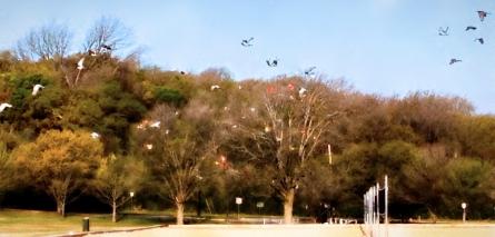 Birds & Kites