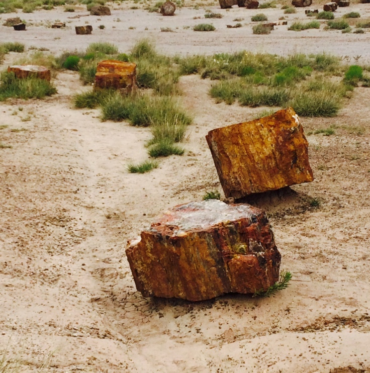 8a - Petrified Forest National Park 1